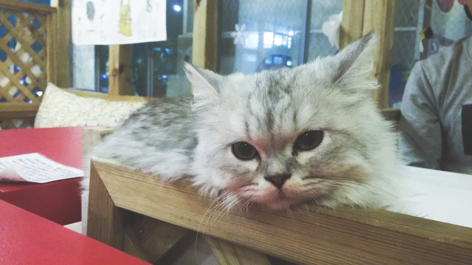 south korea, seoul, traveling, wanderlust, dangerously me, photography, cat cafe