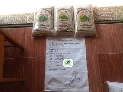 Benih Pesanan  UMAR SAID Karawang, Jabar.  (Sebelum Packing)