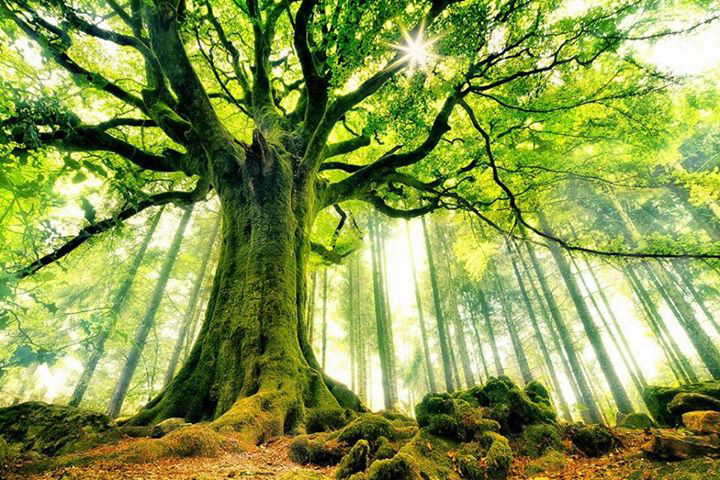 Pohon Berbuah Sekali