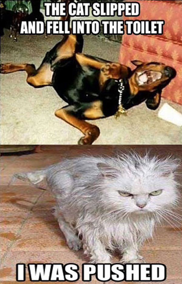 30 Funny animal captions - part 13 (30 pics), animal pictures with captions, funny memes