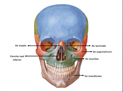 not defteri: Anatomi ders notu 12.10.15