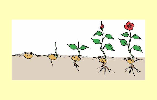 Pertumbuhan Makhluk Hidup, Perkembangan Makhluk Hidup