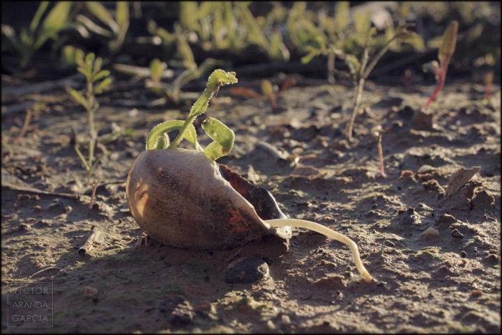 fotografia,naturaleza,caracol,planta,raiz,tierra,limites,serie,arte,fuente_alamo