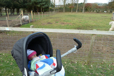 Child in a pushchair at a farm