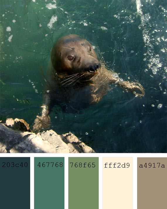 pantone color of the day, fir color palette, paleta de colores verdiazules