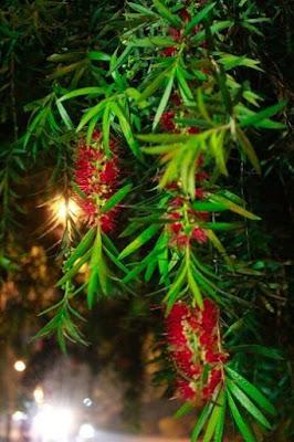 Giải mã giấc mơ thấy cây liễu & ngủ nằm mơ thấy cây hoa liễu
