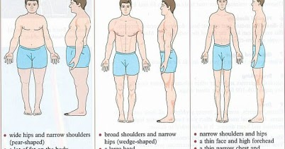 Workouts for Ectomorph, Mesomorph and Endomorph Body Types