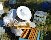 Πως θα γλιτώσουμε απο τα τσιμπήματα στα μελίσσια. 5 λέπτομέρειες που λίγοι γνωρίζουν