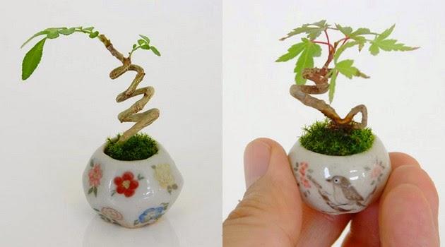 miniature plants, itty bitty plants
