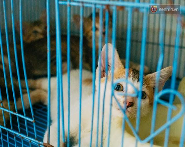 Những chú mèo con tội nghiệp được bà Chi cưu mang.