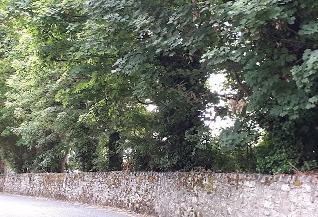 Kivimuuri, puut