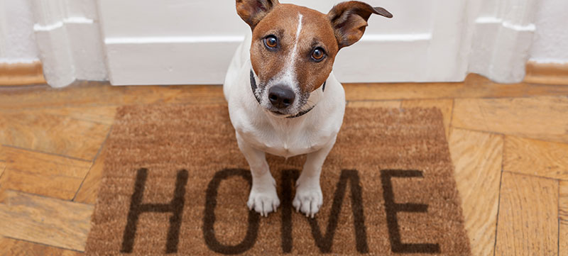How to Make Your Home Pet Friendly with Style