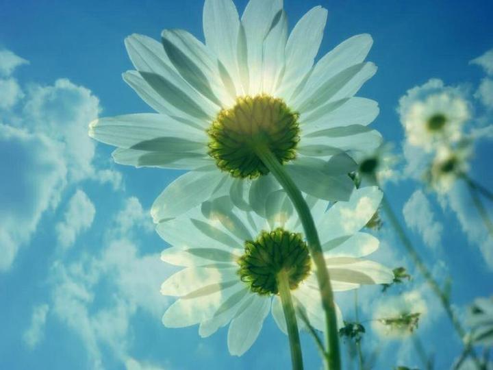 gölge yapan çiçekler