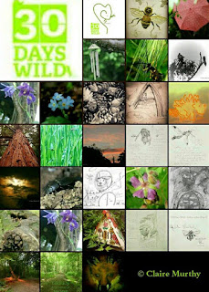 Wildlife Blog : British Wildlife, Art and Writing. 30 Days Wild Random Acts of Wildness.