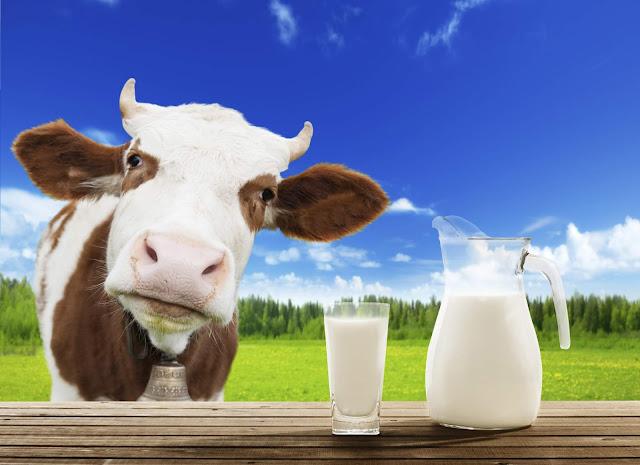 Парное молоко польза или вред
