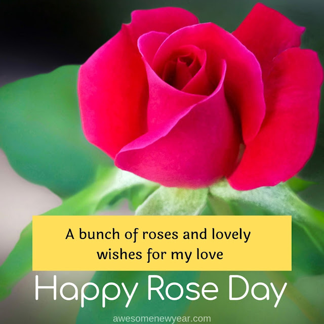 Unique Rose Day pics