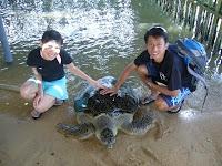 penyu Bali