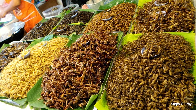 Hasil gambar untuk makanan ekstrim thailand