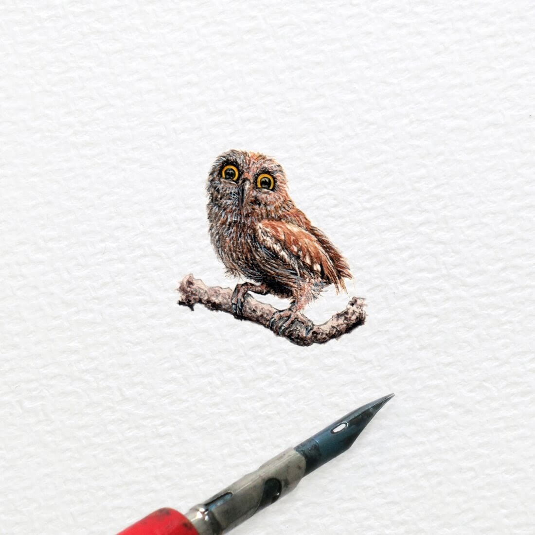 04-Pigwidgeon-The-Owl-Frank Holzenburg Miniature Drawings and Paintings of Animals-www-designstack-co