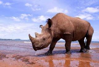 turismo ecologico en kenia
