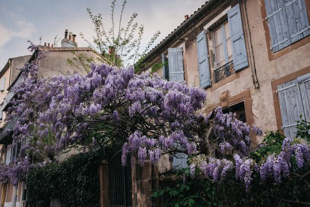 Glycine rue millau aveyron
