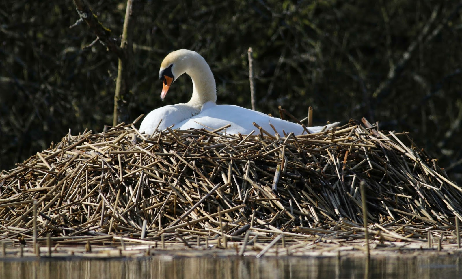 Nature in the Heart of England: Upper Wardington: an ...