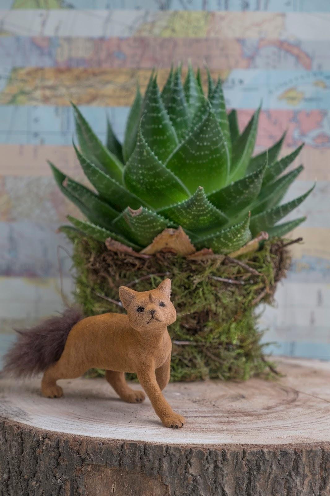 Vetplanten met mos voor decoratie - Plant & bloem
