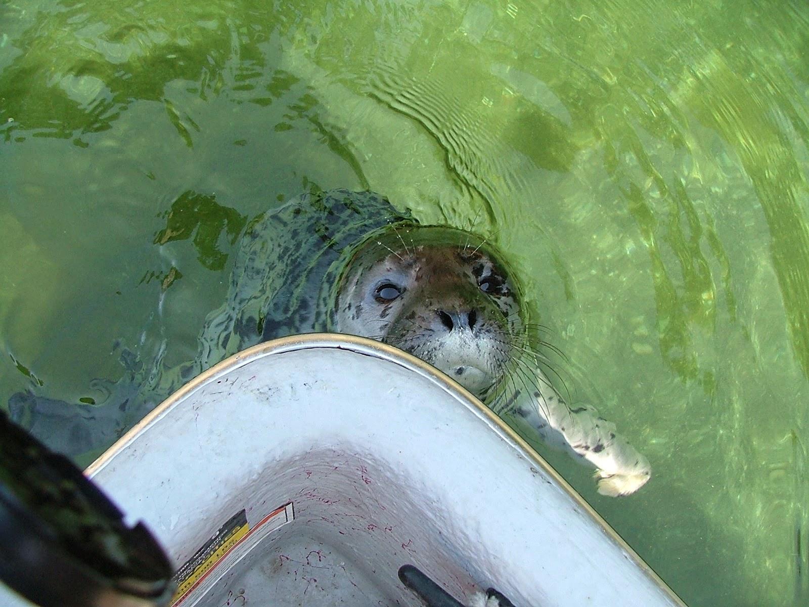Seal pup #3