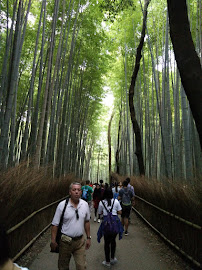Travel #5 ARASHIYAMA