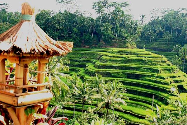 Keistimewaan Wisata Ubud