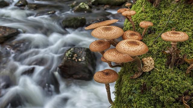 Wallpaper met paddenstoelen en mos langs de rivier.