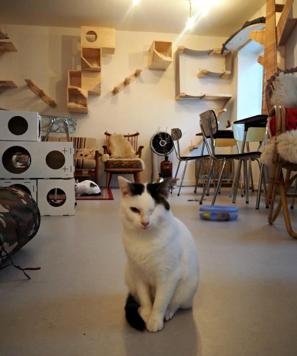 cat café netherlands