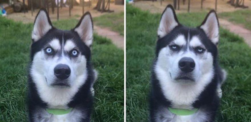 Owner Pretends To Throw Ball And Successfully Captures The Moment Dog Realizes He Was Betrayed