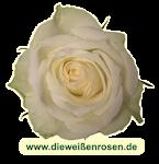 http://dieweissenrosen.de/