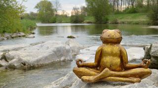 meditating frog photo