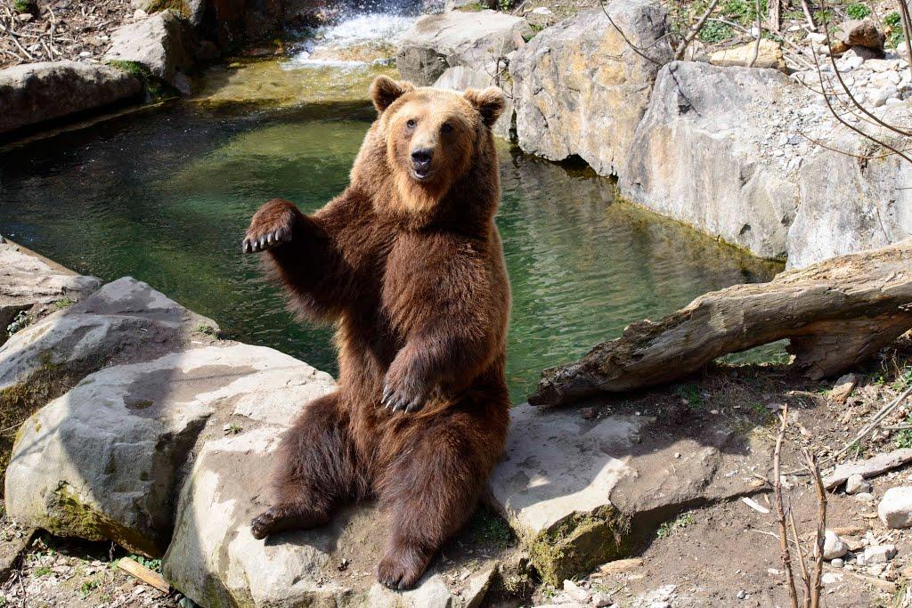 نتيجة بحث الصور عن حديقة حيوان جبال الألب