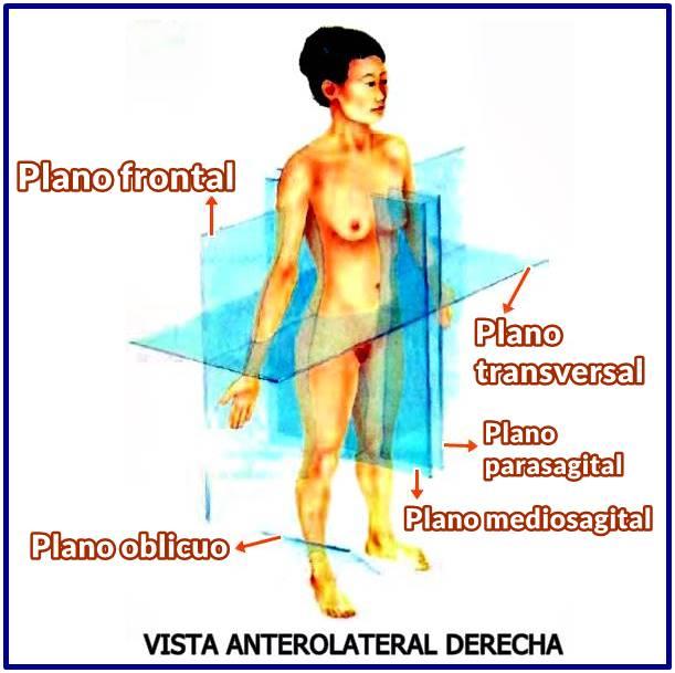 Planos anatómicos representados en el cuerpo de una mujer