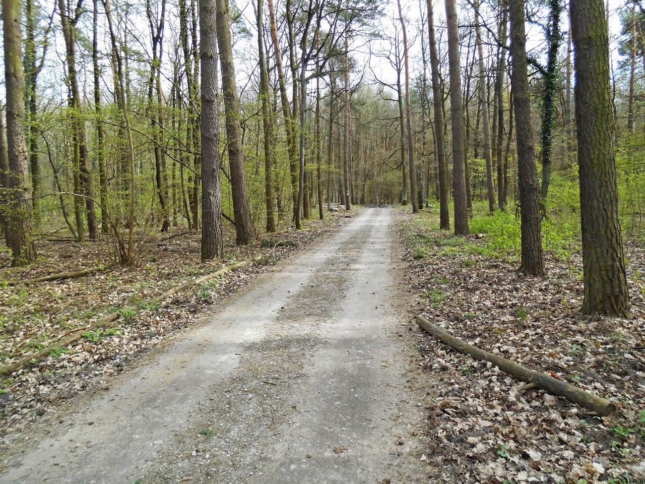 drzewa, las, iglaste, krzewy