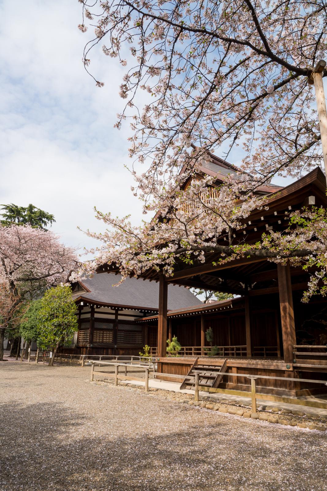 靖国神社の桜の写真