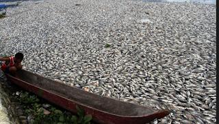 Fenomena Banyaknya Ikan Yang Mati Di Pantai Ancol.
