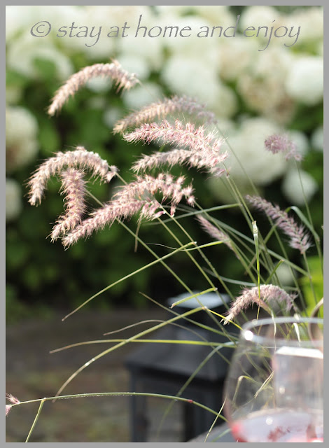 Pennisetum Carley Rose - stay at home and enjoy