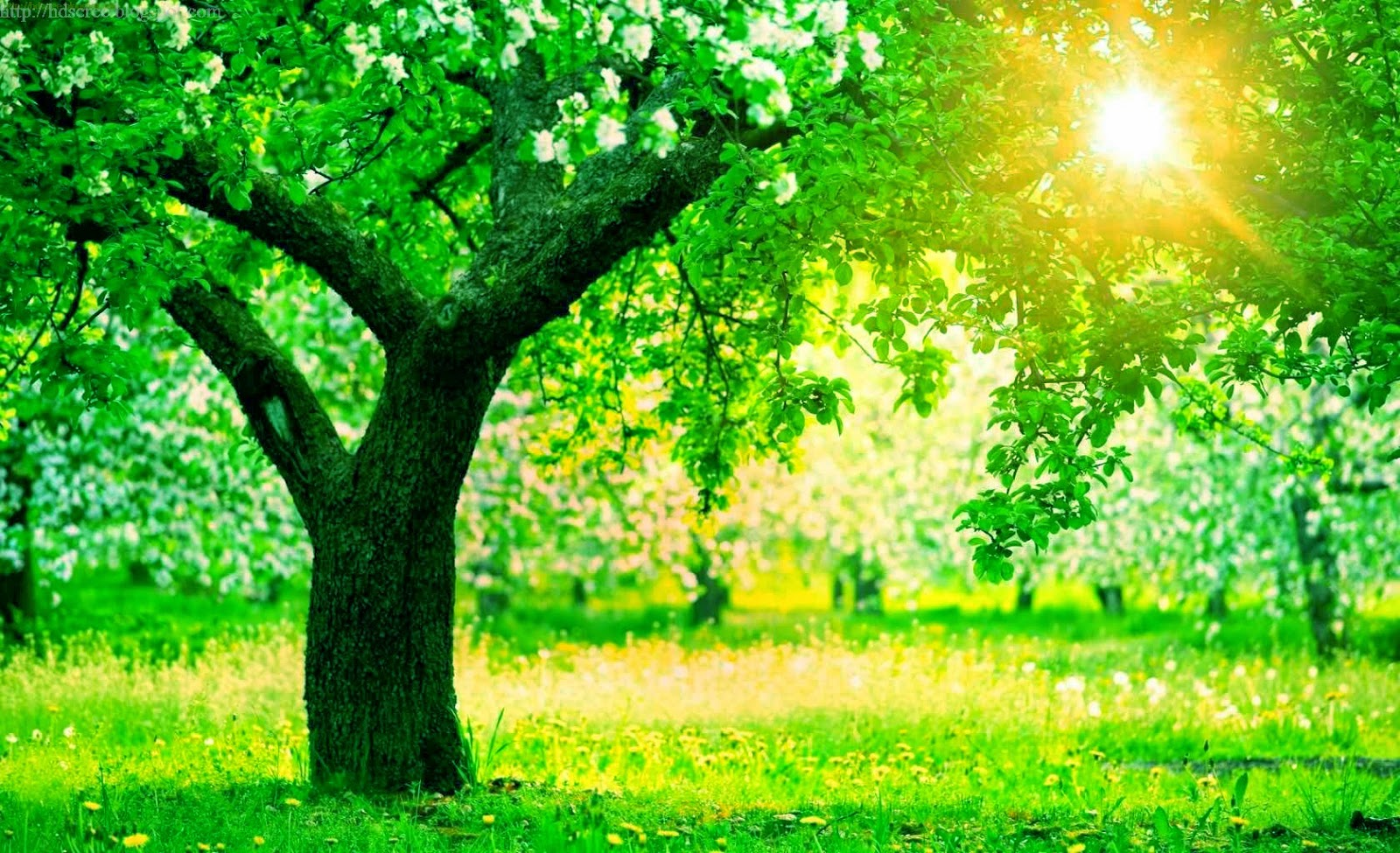 Hd Wallpaper Hd Screensaver Hd Background Hd Screensaver Collection Of Green Tree