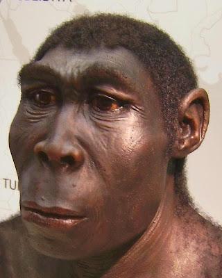 Manusia Purba (Meganthropus, Pithecanthropus, Homo)