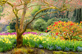 poemas dia primavera