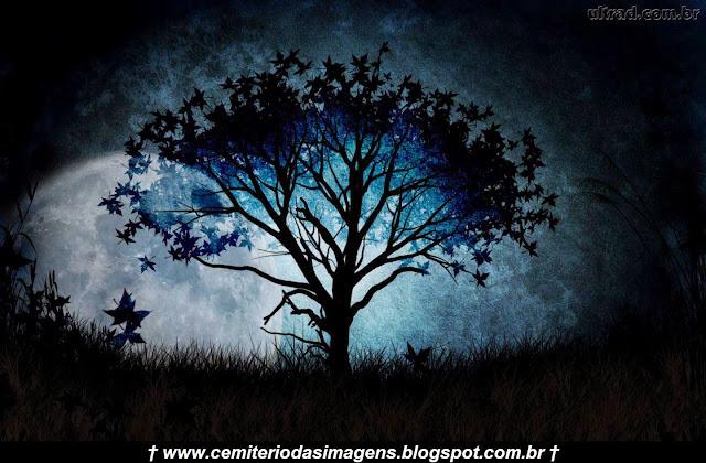 noturna,noite,lua cheia