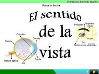 http://cplosangeles.juntaextremadura.net/web/edilim/curso_3/cmedio/los_sentidos_3/la_vista/la_vista.html