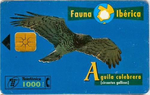 Tarjeta telefónica Águila culebrera (Circaetus gallicus)