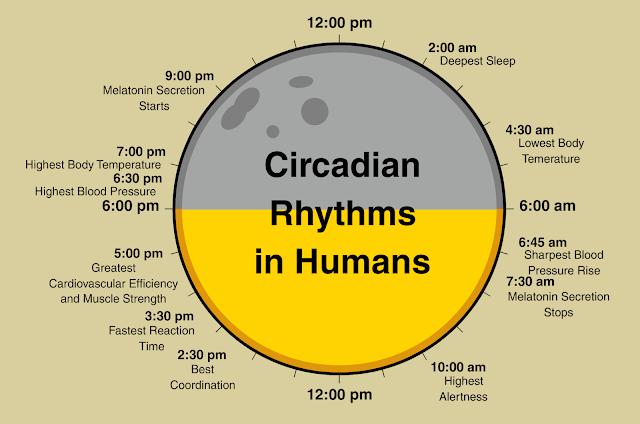 sistem carcadian