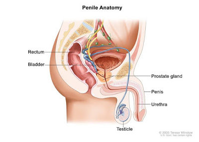 http://www.siiut.com/penile-cancer-treatment/