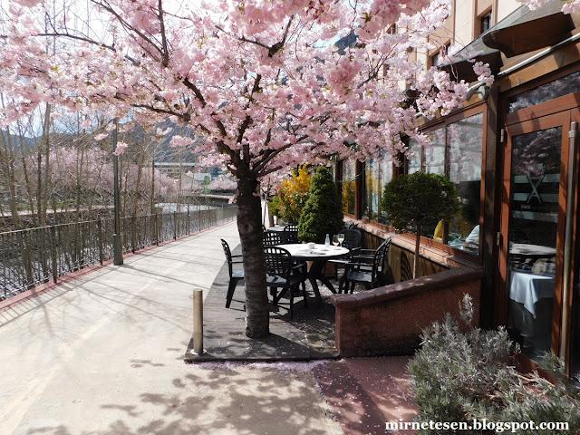 Андорра-ла-Велья - цветение вишни в апреле